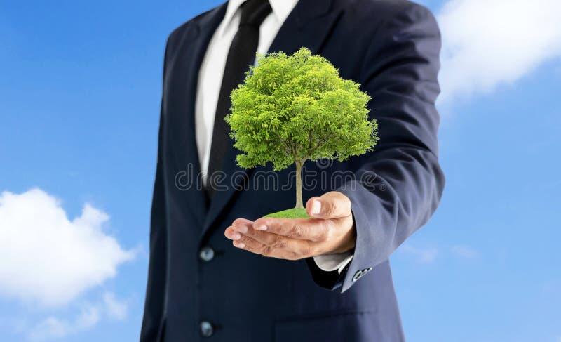Uma grande árvore na mão que guarda o homem de negócios com um fundo do céu fotografia de stock
