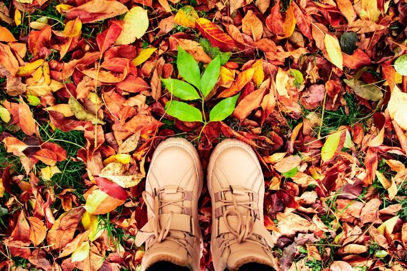 Uma grande folha verde está no chão entre as folhas brilhantes do outono, aos pés das fêmeas foto de stock