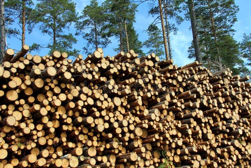 Uma grande pilha de madeira para a energia renovável imagens de stock