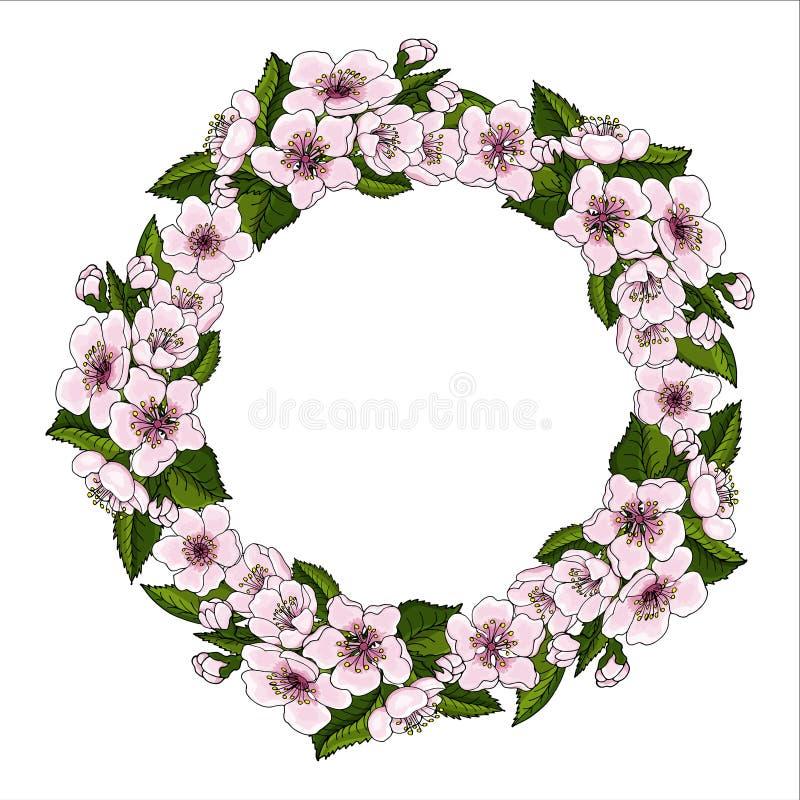 Uma grinalda luxúria de flores da cereja e brilhantemente das folhas cor-de-rosa da cereja do verde em um fundo branco ilustração royalty free