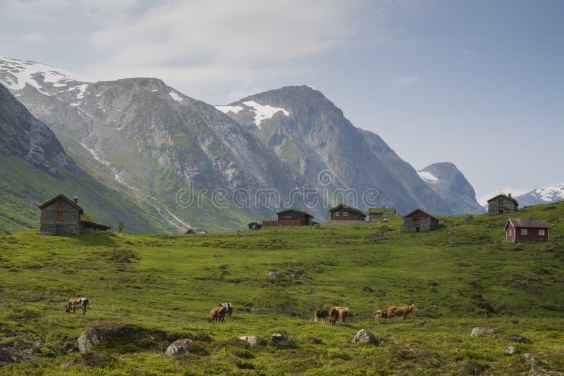 Uma ideia da natureza de Noruega imagens de stock