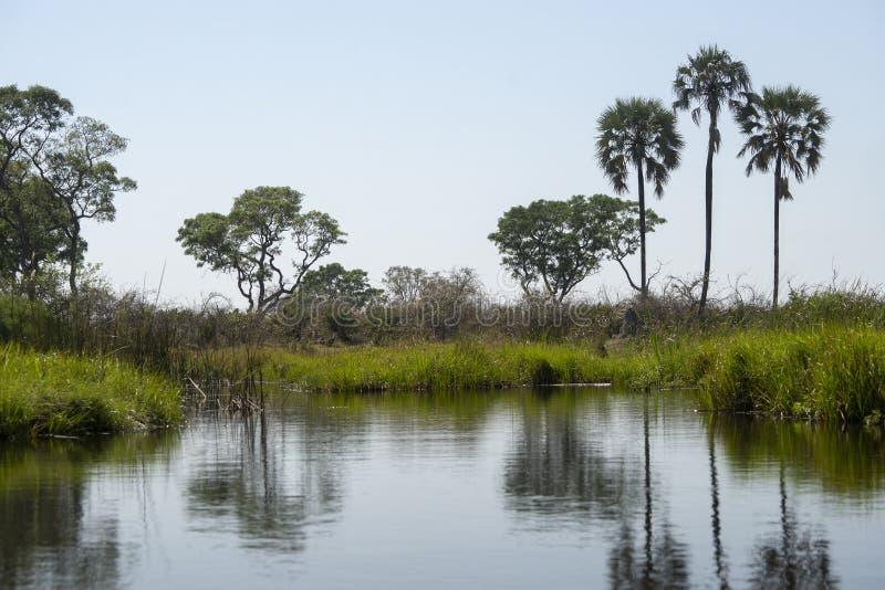 Uma ideia do delta de Okavanga - Botswana - África fotografia de stock