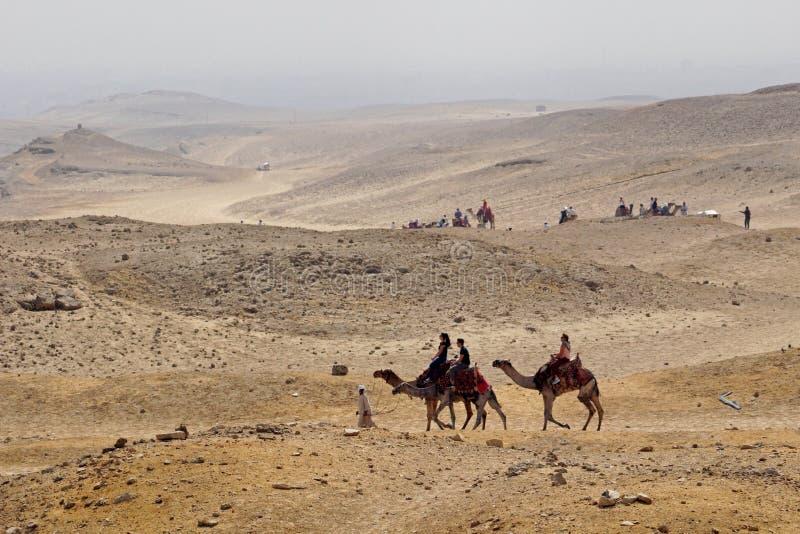 Uma ideia do platô de Giza & um passeio do camelo nos subúrbios do Cairo foto de stock royalty free