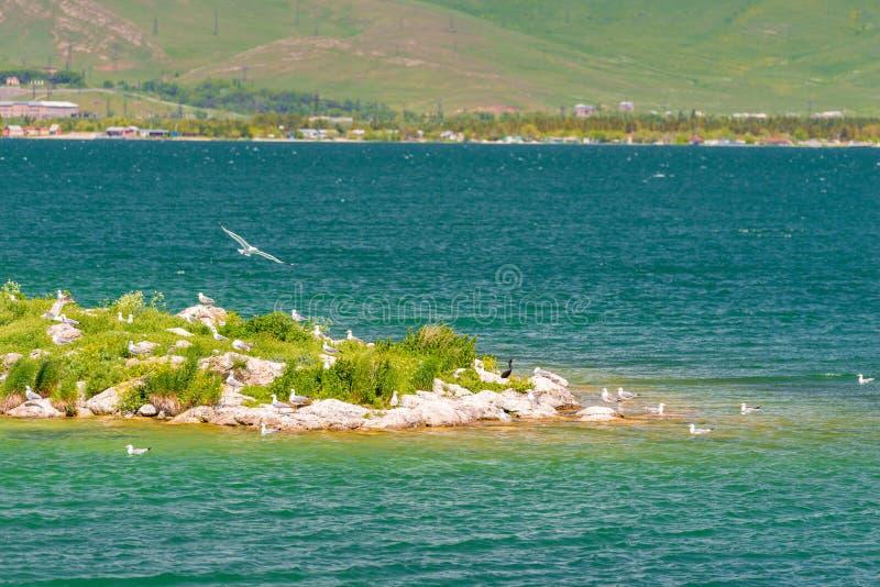Uma ilha pequena na doca do lago para gaivotas foto de stock