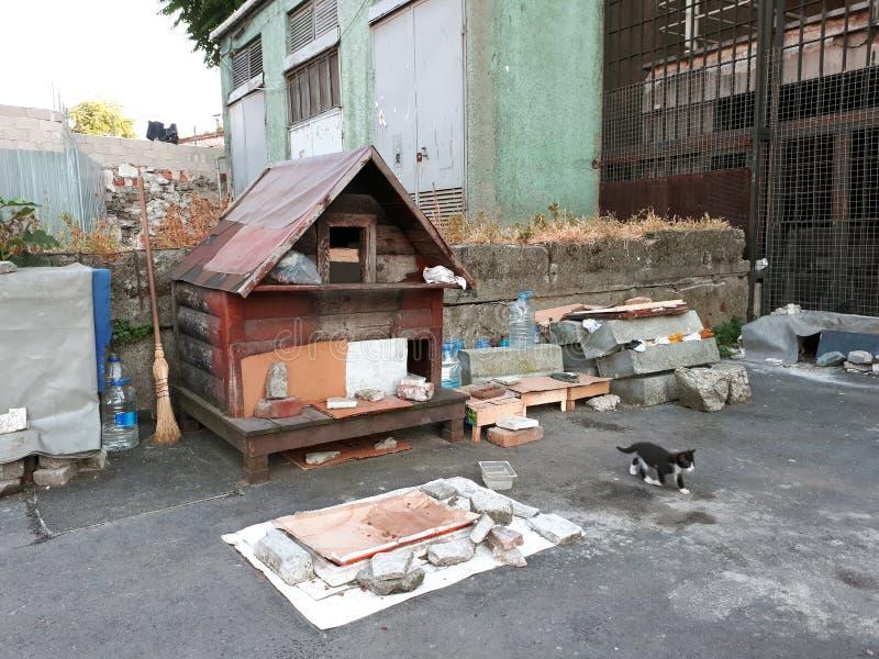 Uma ilustra??o de um condom?nio/teatro do gato com dos quatro gatinhos incluir diferente dos brinquedos e: Siamese, angora e gato fotografia de stock