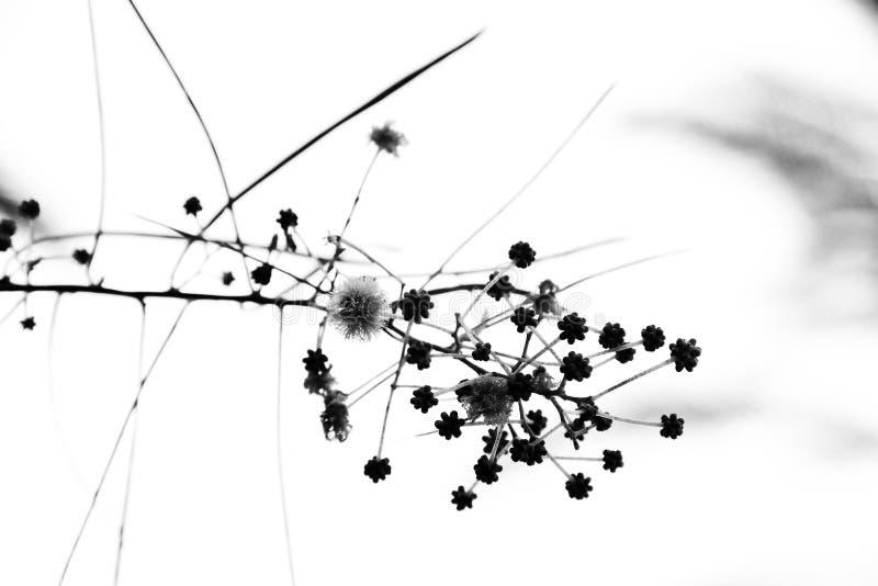 Uma imagem abstrata de um ramo bonito foto de stock