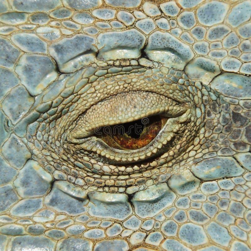 Uma imagem bonita do close-up de um réptil verde fotografia de stock