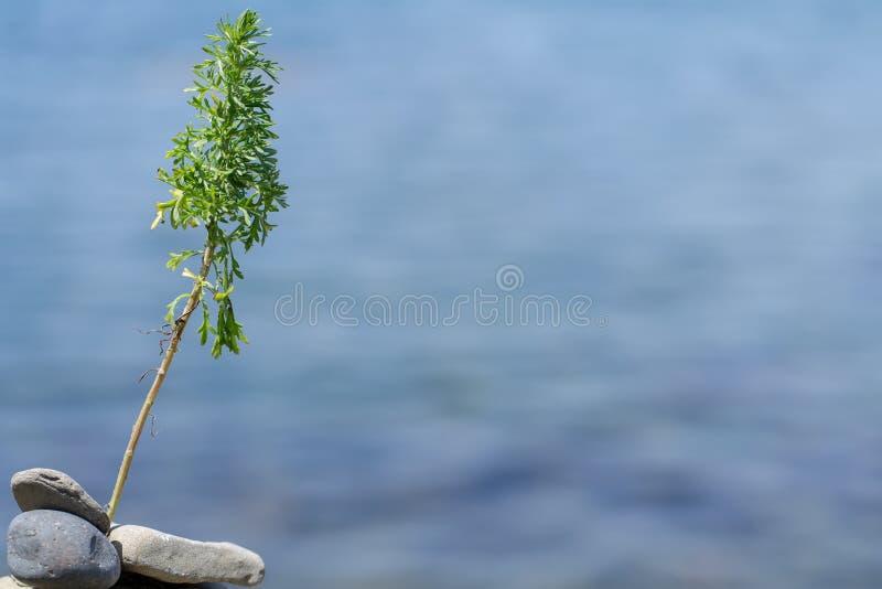 Uma imagem da planta contra o mar imagens de stock