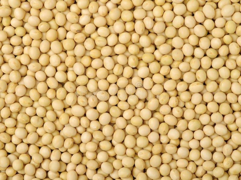 Uma imagem de feijões da soja imagem de stock royalty free