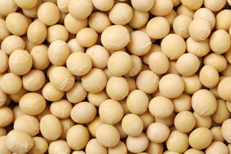 Uma imagem de feijões da soja imagens de stock royalty free