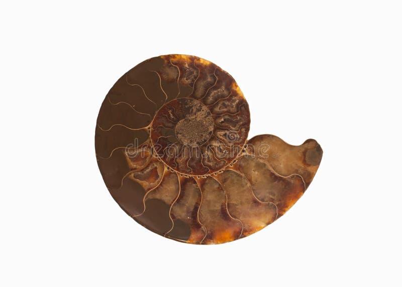 Uma imagem do isolado de um escudo fossilizado da amonite que mostra as câmaras enchidas de cristal em seu teste padrão de repeti foto de stock royalty free