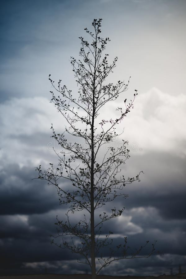 Uma imagem dramática de uma árvore alta que senta-se contra céus temperamentais no fundo com tons azuis e amarelos foto de stock