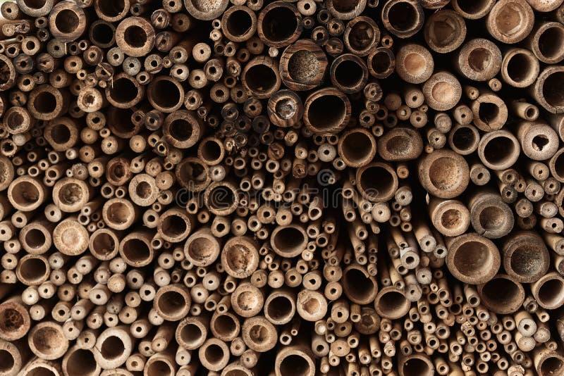 Uma imagem próxima de uma fatia de bambu seco, madeira amarela, textura, papel de parede imagem de stock royalty free