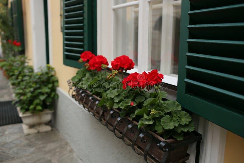 Uma janela austríaca típica com os shuters e quadrado louvered verdes paned janelas com as flores em uns potenciômetros de flor d imagens de stock