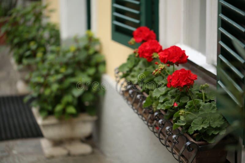 Uma janela austríaca típica com os shuters e quadrado louvered verdes paned janelas com as flores em uns potenciômetros de flor d fotografia de stock