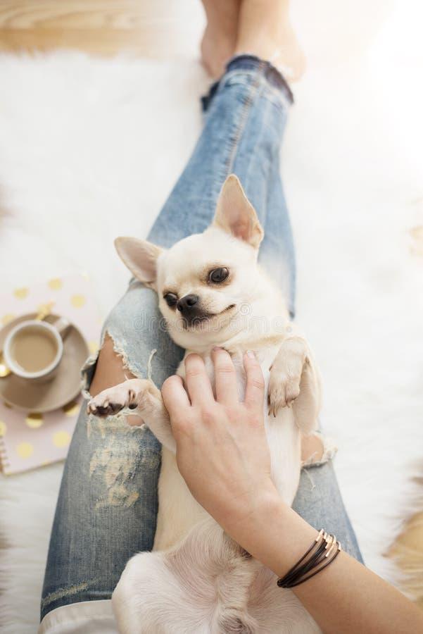 Uma jovem mulher que veste as calças de brim afligidas que sentam-se no assoalho de madeira em um tapete branco da pele em casa e fotografia de stock royalty free