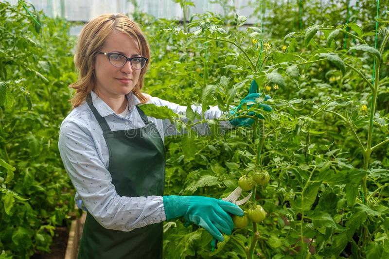 Uma jovem trabalha numa estufa Cultura industrial de produtos hortícolas fotografia de stock