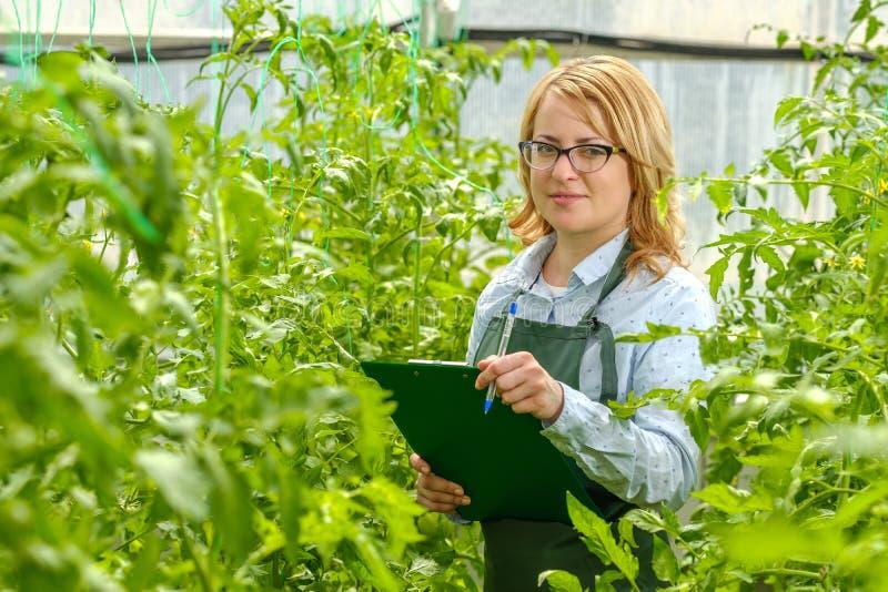 Uma jovem trabalha numa estufa Cultura industrial de produtos hortícolas foto de stock royalty free