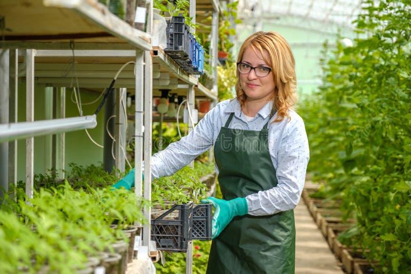 Uma jovem trabalha numa estufa Cultura industrial de produtos hortícolas imagens de stock royalty free