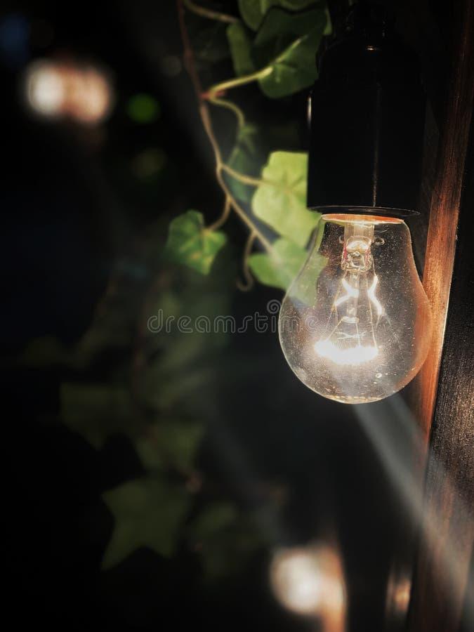 Uma lâmpada incandescente em um cartucho preto que pendura na rua contra um fundo das folhas na noite fotos de stock