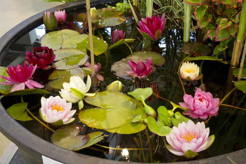 Uma lagoa artificial pequena no jardim foto de stock