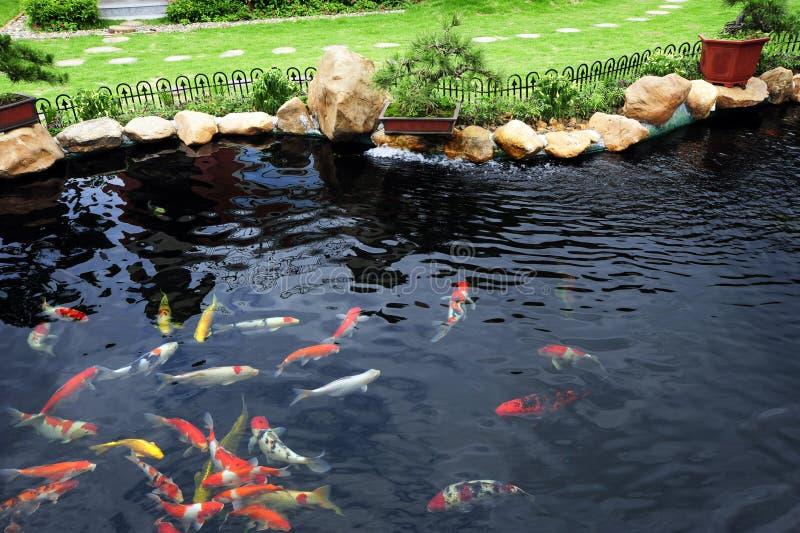 Uma lagoa de peixes no jardim fotos de stock