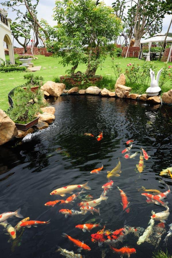 Uma lagoa de peixes no jardim imagens de stock royalty free