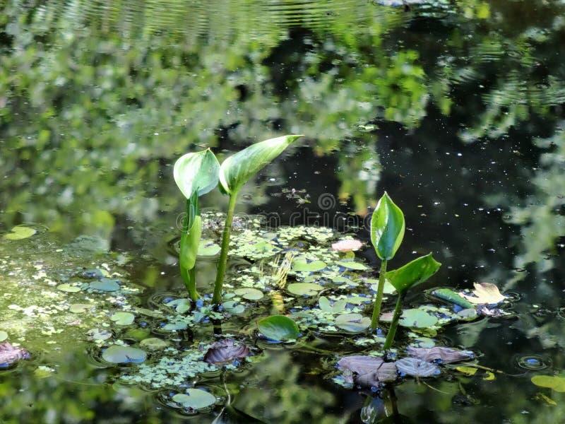 Uma lagoa velha Estações de tratamento de água fotografia de stock royalty free