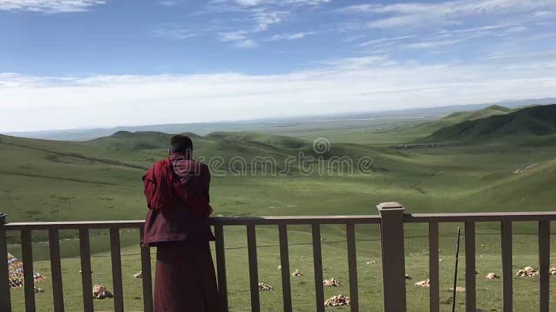 Uma Lama reza na pradaria infinita imagens de stock royalty free