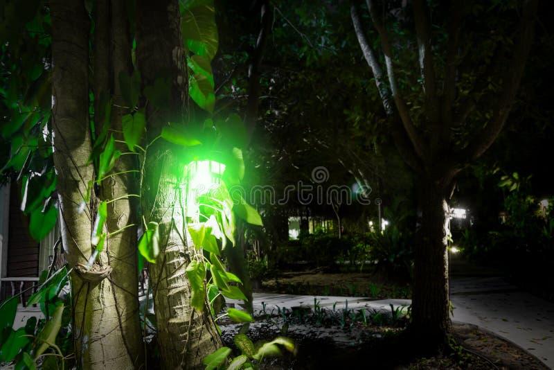Uma lanterna de madeira com luz verde pendura em uma árvore perto das folhas Ilumina a estrada com uma luz sinistra da lâmpada  fotos de stock royalty free