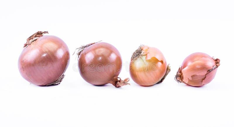 Uma linha de cebolas do ocre em um fundo branco - vista dianteira imagens de stock royalty free