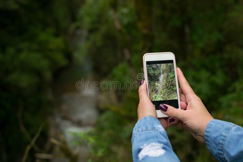 Uma mão do ` s da mulher com um tratamento de mãos toma uma foto da paisagem da floresta imagem de stock