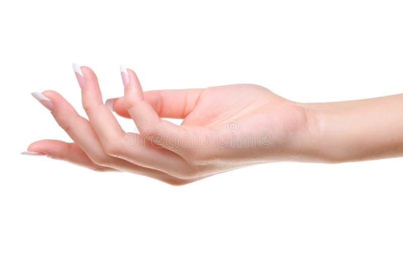 Uma mão fêmea elegante fotos de stock royalty free