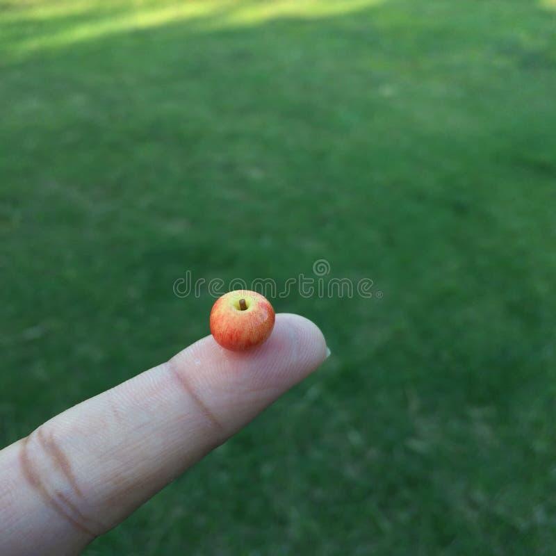 Uma maçã minúscula fotos de stock