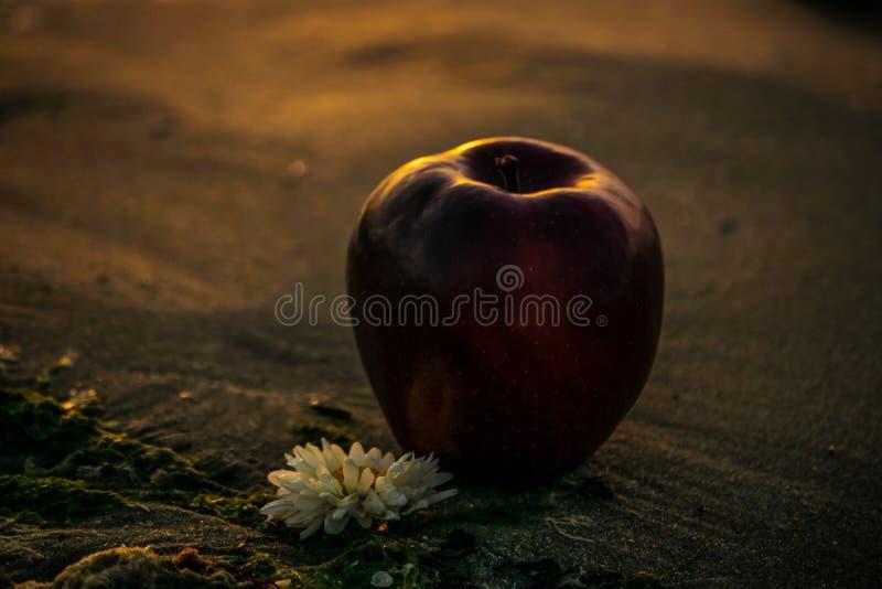 Uma maçã na praia com um chrisantemum fotos de stock royalty free