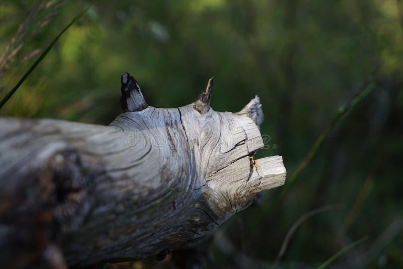 Uma madeira é como uma vaca na floresta imagens de stock