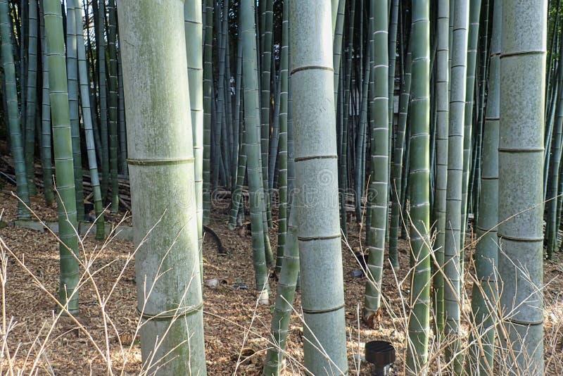 uma madeira de bambu em um parque em tokyo imagens de stock