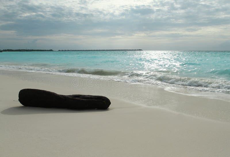 Uma madeira inoperante na praia na ilha tropical imagem de stock royalty free