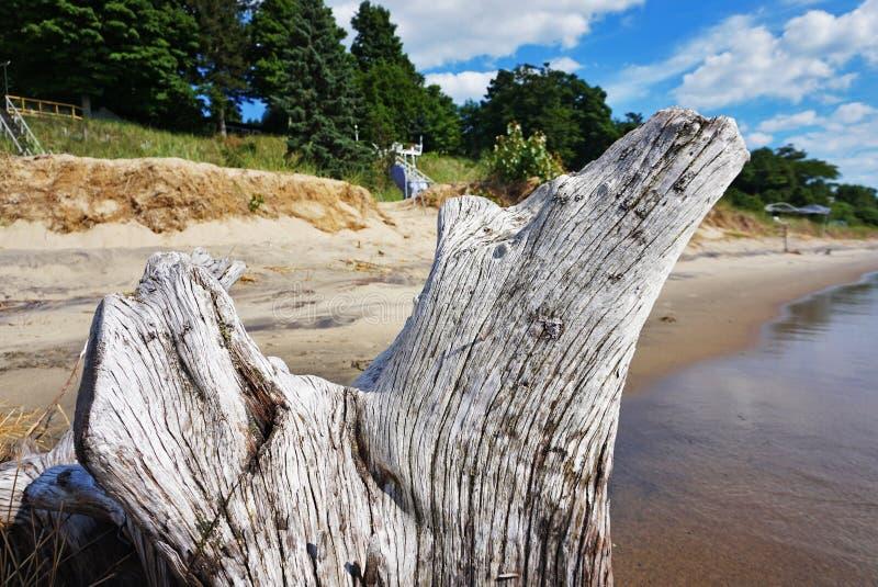 Uma madeira lançada à costa branca imagem de stock