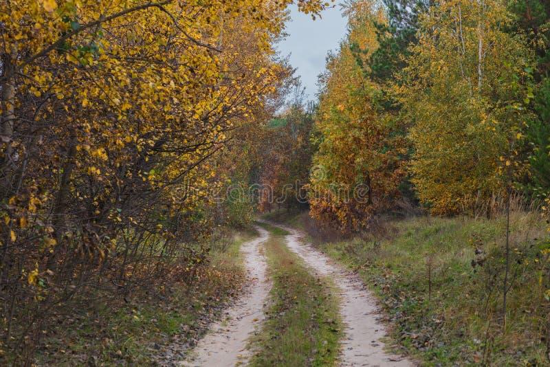 Uma maneira através da floresta do outono da noite em torno das árvores com folhas amarelas fotos de stock royalty free