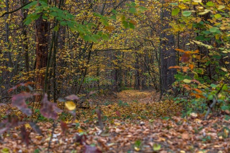 Uma maneira através da floresta do outono da noite em torno das árvores com folhas amarelas fotografia de stock