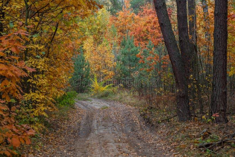 Uma maneira através da floresta do outono da noite em torno das árvores com y foto de stock royalty free