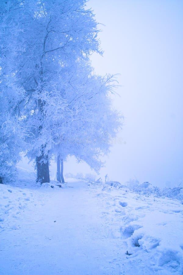 Uma manhã de congelação foto de stock