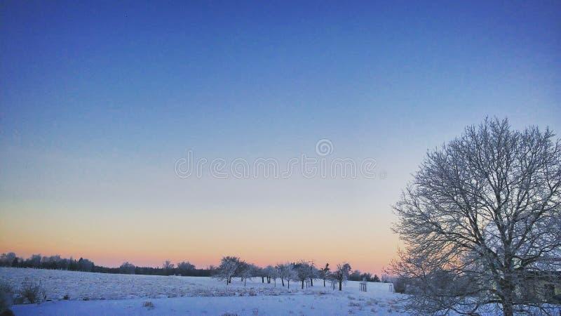 Uma manhã no inverno fotografia de stock royalty free