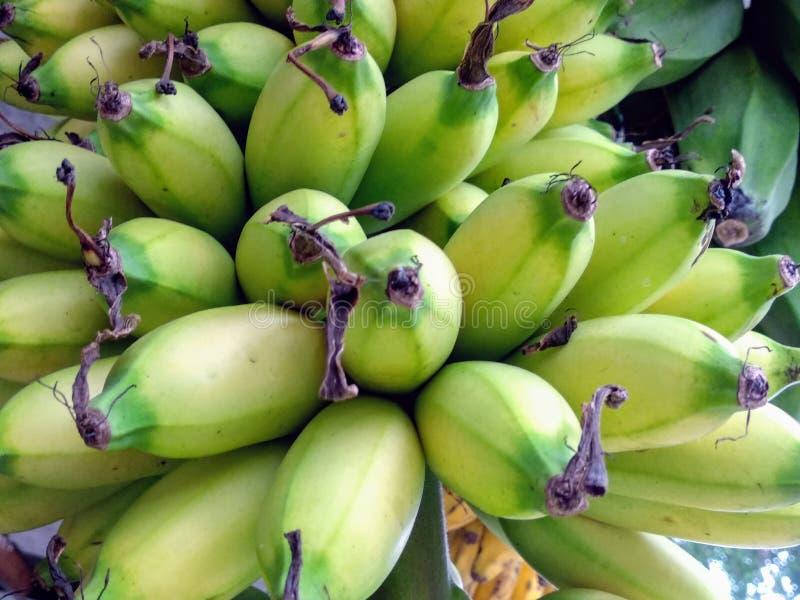 Uma Maravilhosa Banana Stalk fotos de stock