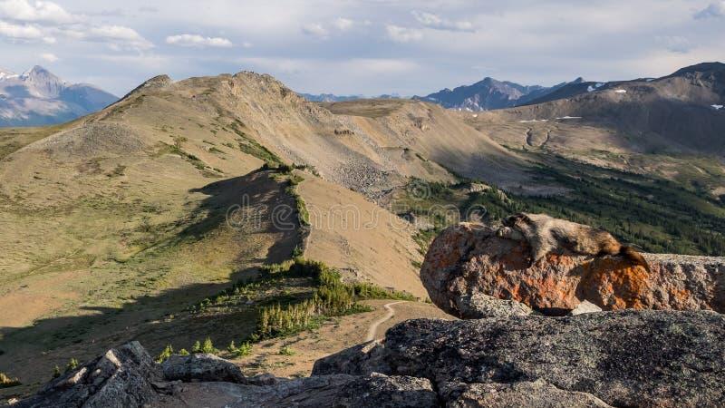 Uma marmota grisalho embebe acima o sol em um dos montes calvos repica i imagens de stock royalty free