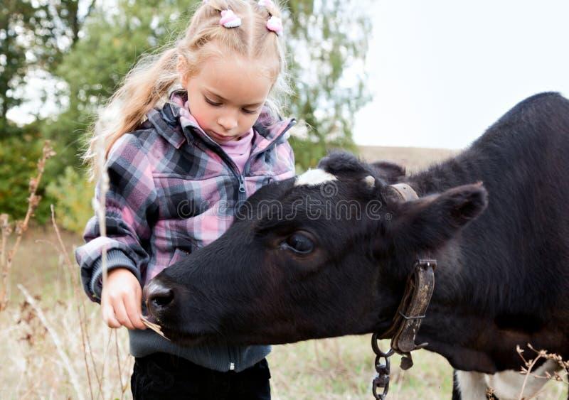 Uma menina alimenta a vaca imagens de stock