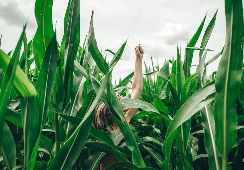 Uma menina bonita esconde no campo de milho Resto Dreamlike no campo imagem de stock