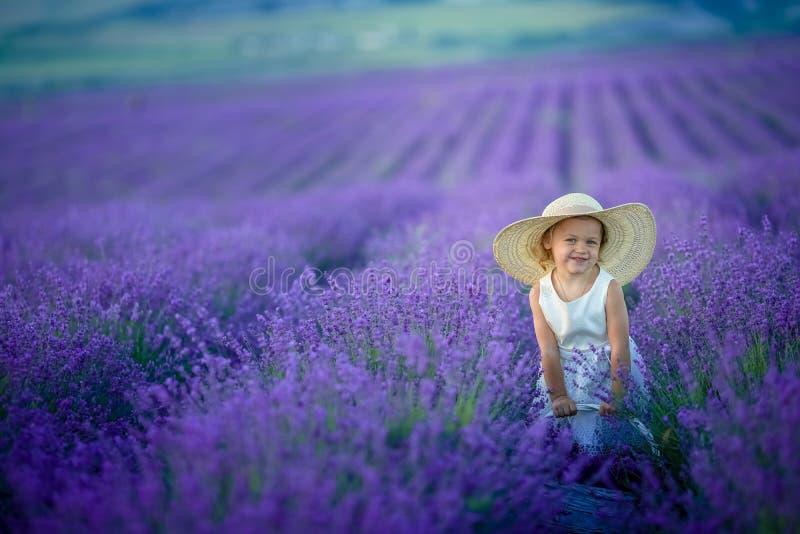 Uma menina com tranças engraçadas recolhe o ramalhete no campo da alfazema, guardando e cheira as flores da alfazema fotografia de stock royalty free