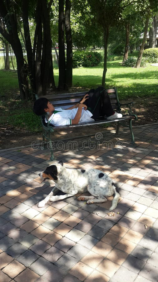 Uma menina e seu cão imagem de stock